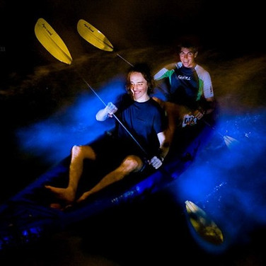 Take the bioluminescence tour at night