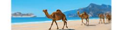 MSC ARABIA_edited