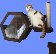 Cat Hexagon