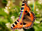 Butterfly1_edited_edited_edited_edited_e