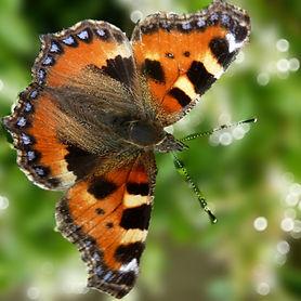 Butterfly1_edited_edited_edited.jpg