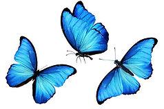 small butterflies National Ultreya 2021.jpg