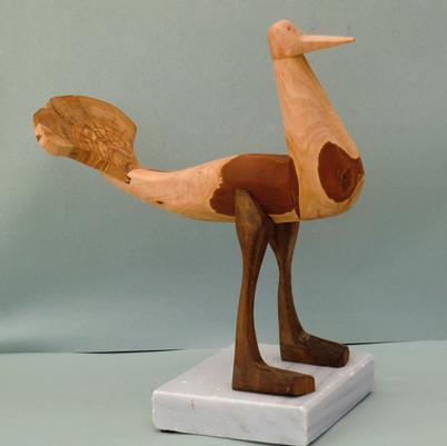 Samson the bird