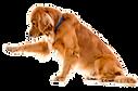 reiki_veterinário.png