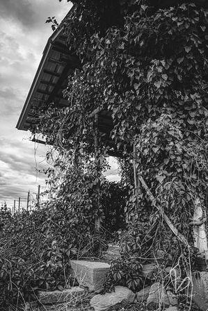 Paysage rurale. Près de Molsheim. Photo monochrome.