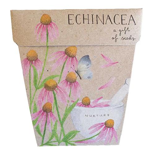 Seed Gifts - Echinacea