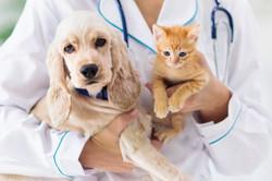 ShelterMed_vet-with-dog-kitten_iStock-1171733307_1s