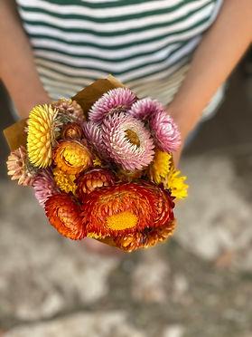 זר פרחי קש strawflowers