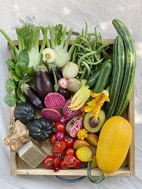 סל ירקות עונתי לאיסוף