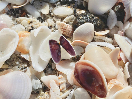 10 Steps in Making a Coquina Shell Resin Necklace
