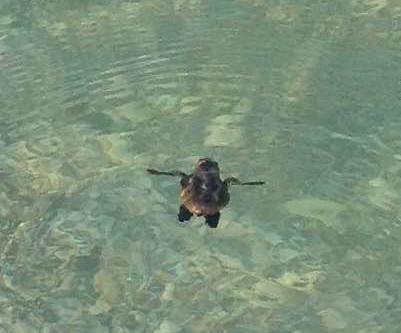 Celebrate World Sea Turtle Day (June 16)