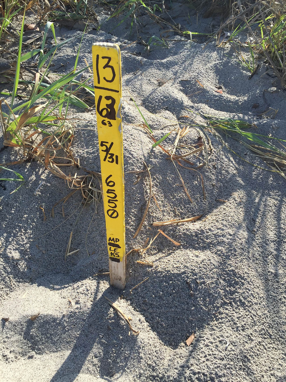 yellow-sea-turtle-nest-marker