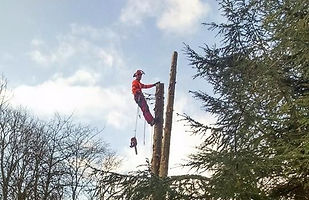 tree surgery in Ross-Shire