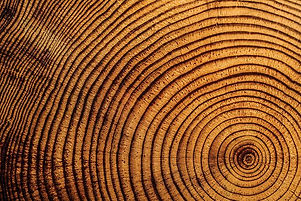 tree rings - less texture.jpg