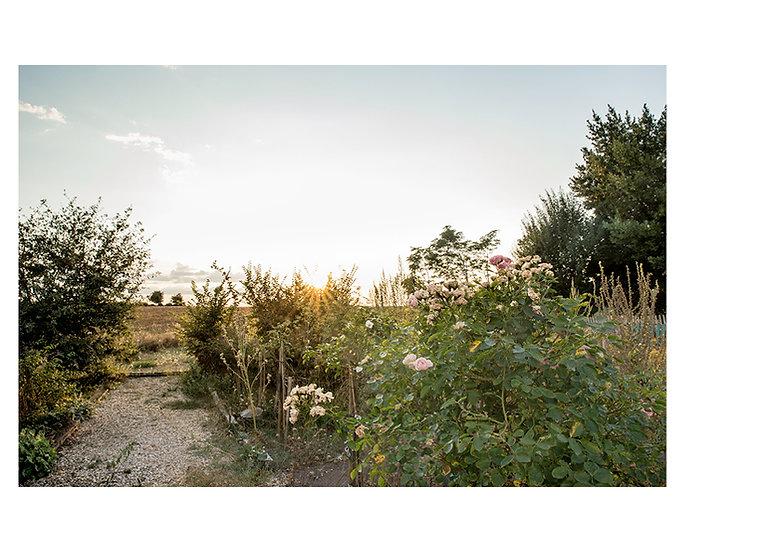 Planche jardin17.jpg