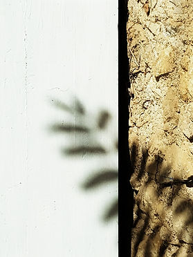 Ombre végétale.jpg