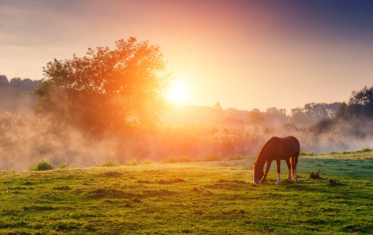 A horse grazing on grass at sunset