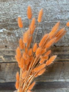 Lagurus orange 2/1$