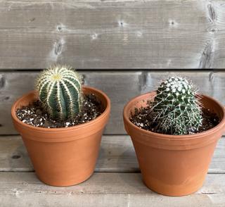 Cactus assortis 20$ chacun