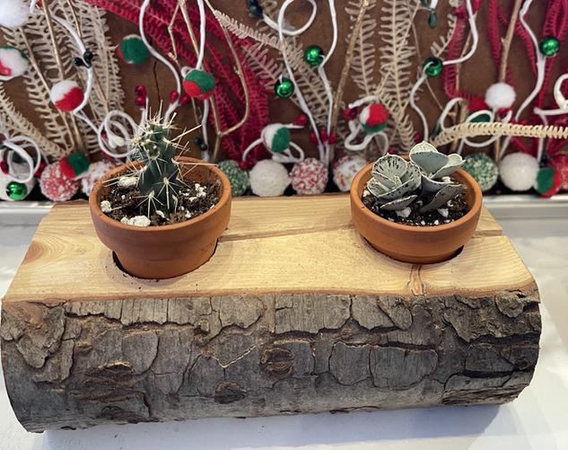 Duo de cactus sur bûche 15$