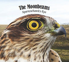 Album cover for Sparrowhawk's Eye. A sparrowhawks head with a large yellow and black eye