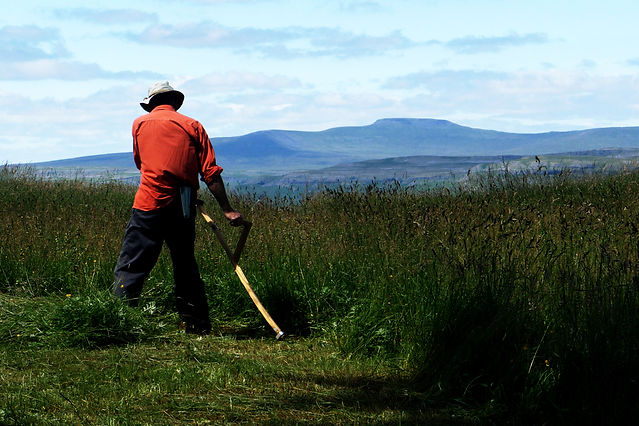 Syther cutting a hay meadow with mountains in the distance.