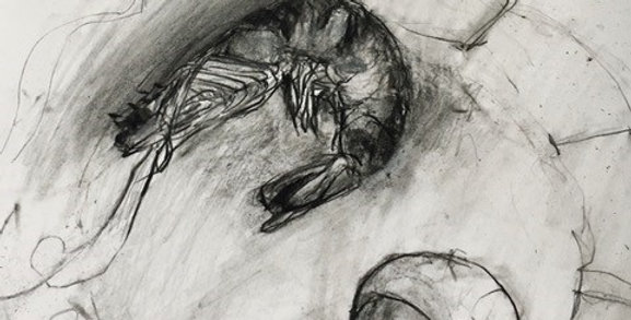Introduction to Drawing with Abby Chambers, WEDNESDAYS 6:30pm-9:00pm