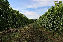 winnice-jaworek-dolnyslask-04-0817.jpg