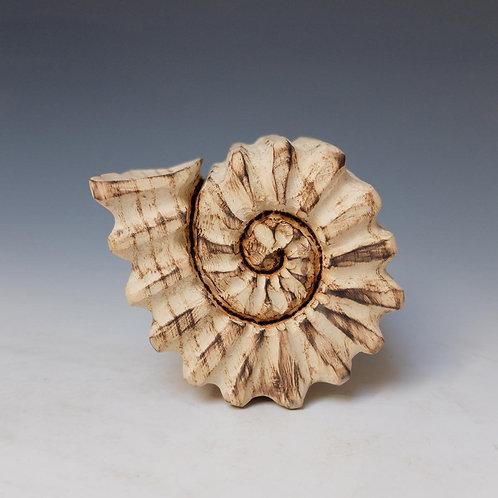 Ammonite Box 2