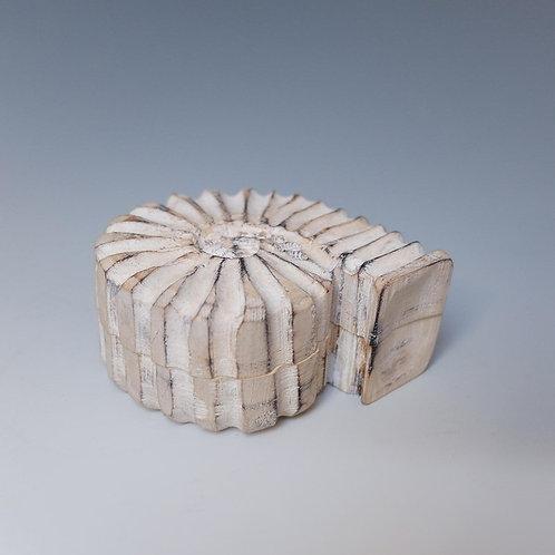 Ammonite Box 1