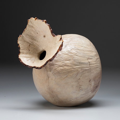 Bleached Madrone Burl Flower Pot
