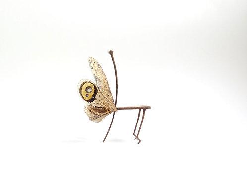 Fulgoridae Chair