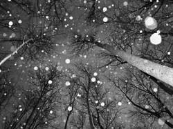amazing-beautiful-black-and-white-falling-snow-landcape-Favim_com-418399