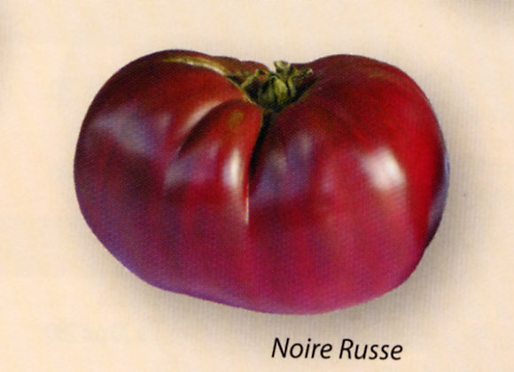 Tomate Russe noire