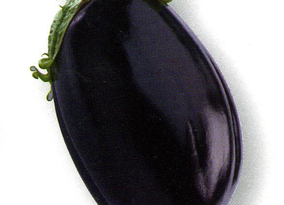 Aubergine Bonica