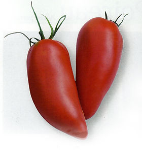 Tomate Mexicaine