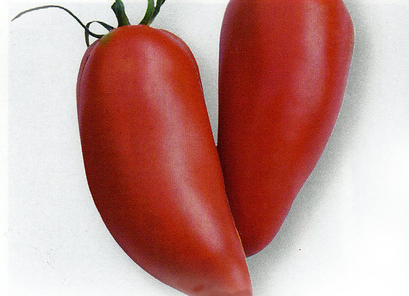 Tomate Greffee Mexicaine