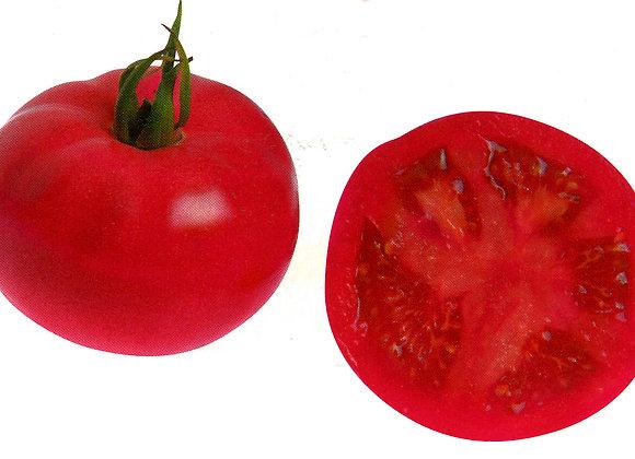 Tomate Fuji Pink