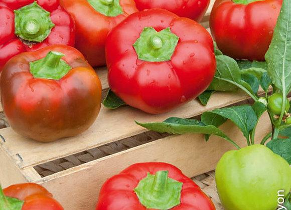 Poivron Tomate