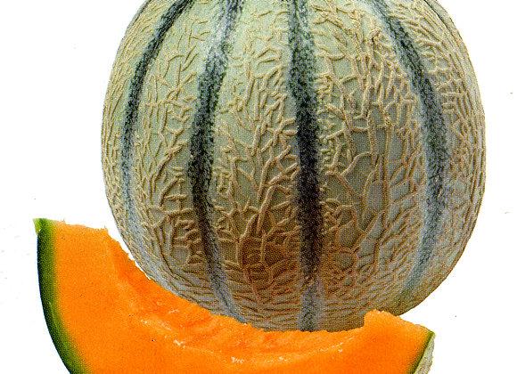 Melon brode Sivan