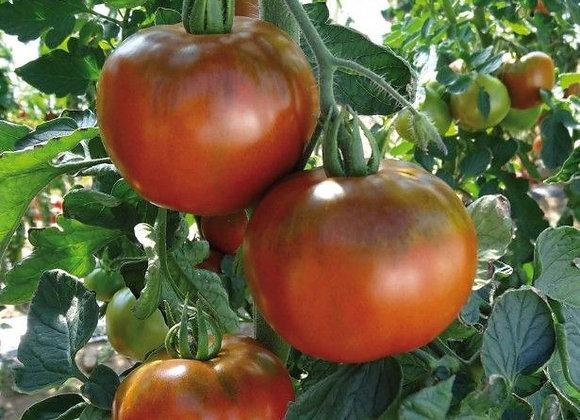 Tomate Chocoprevia