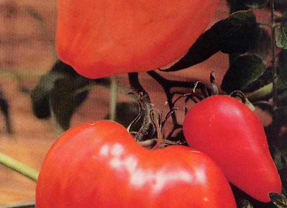 Tomate Greffee Coeur de boeuf