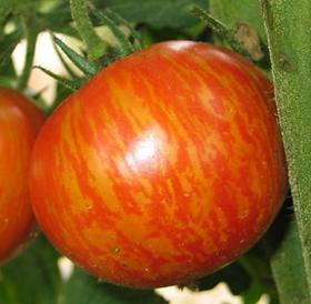 Tomate Red Zebra