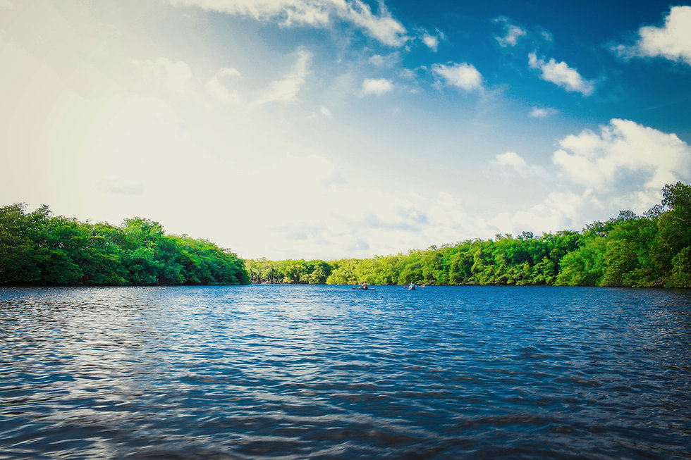calm body of water near tall trees during daytime_edited.jpg