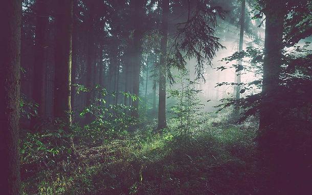 foresta-1080x675.jpg