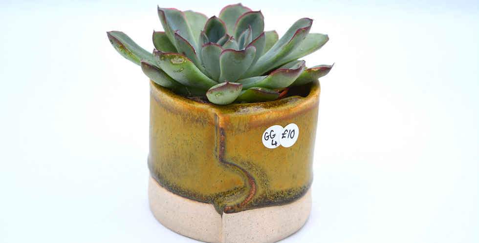 Small slab pot with succulent 4