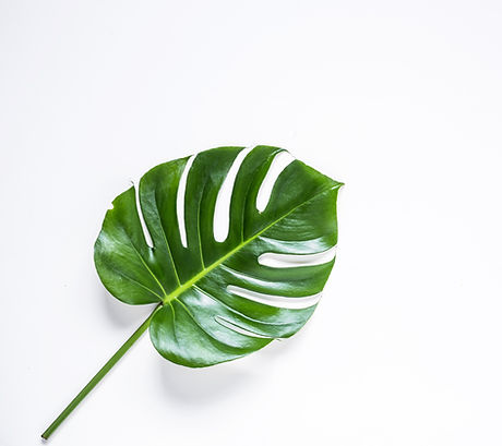 Leaf%20%20_edited.jpg
