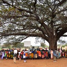 Tree Crusade 2.jpg