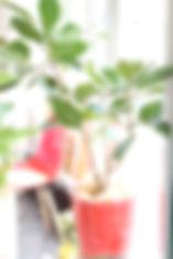 ヘアメイクココ,植物
