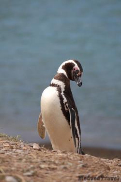 Puerto Madryn (5)